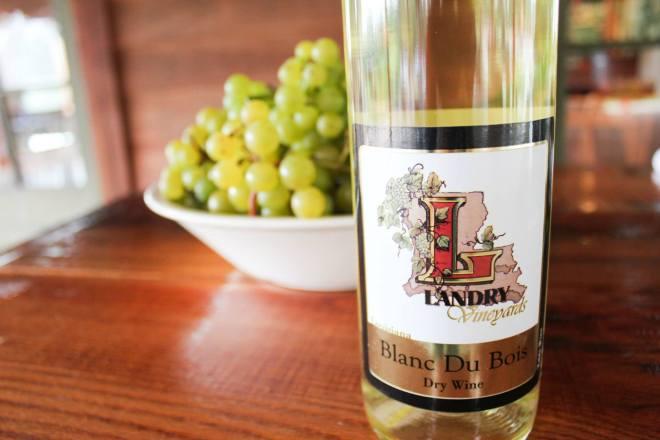 blanc du bois, landry vineyards, west monroe louisiana`