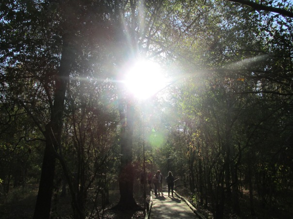 Simran Kang- Sunlit Path (Student)